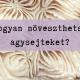 agysejtek_mentalgarden